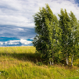 Hot July by Anatoliy Kosterev - Landscapes Prairies, Meadows & Fields ( russia, field, clouds, trees, summer )