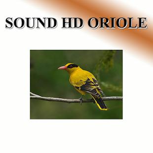 Turtles sound to birds. - náhled