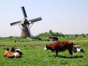 Photo: Landschap met molen en vee. Foto: Nathalie van der Linden
