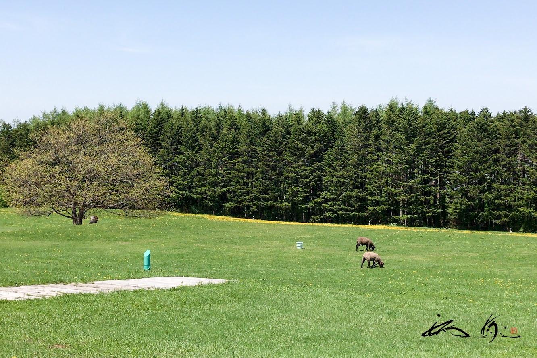 緑の芝生で。。。