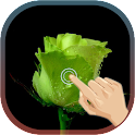 Love Rose Wave live wallpaper icon