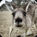 Kangaroo Live Wallpaper icon