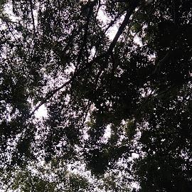 by Vithoba Mahajan - Nature Up Close Trees & Bushes