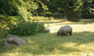 Photo: naturalne kosiarki do trawy