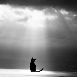 by Vanja Duraković - Digital Art Animals ( digital, surreal, edit, edited, bw, surrealism, photomanipulation, bnw, black and white, manipulation,  )