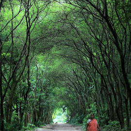 The Forest Path by Udaybhanu Sarkar - Landscapes Forests ( path, forest, pathforest )