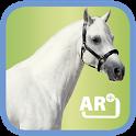 Memo Pferde icon