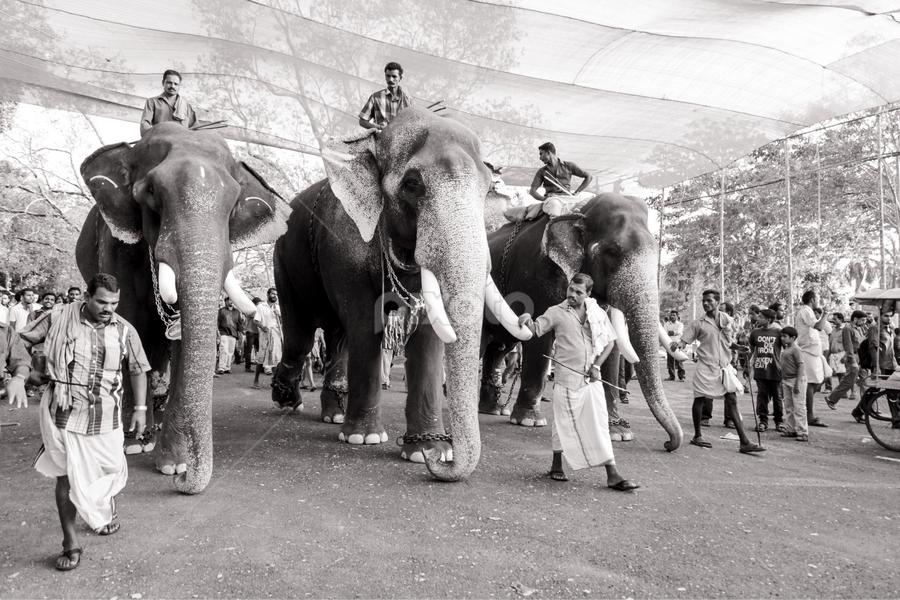 Pooram by Soumya Geetha - City,  Street & Park  Street Scenes