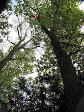 Photo: Onze bomenklimmer met z'n manke achterpoot!!!!