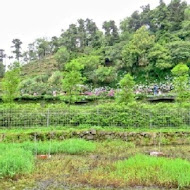 【竹子湖】頂湖小鎮