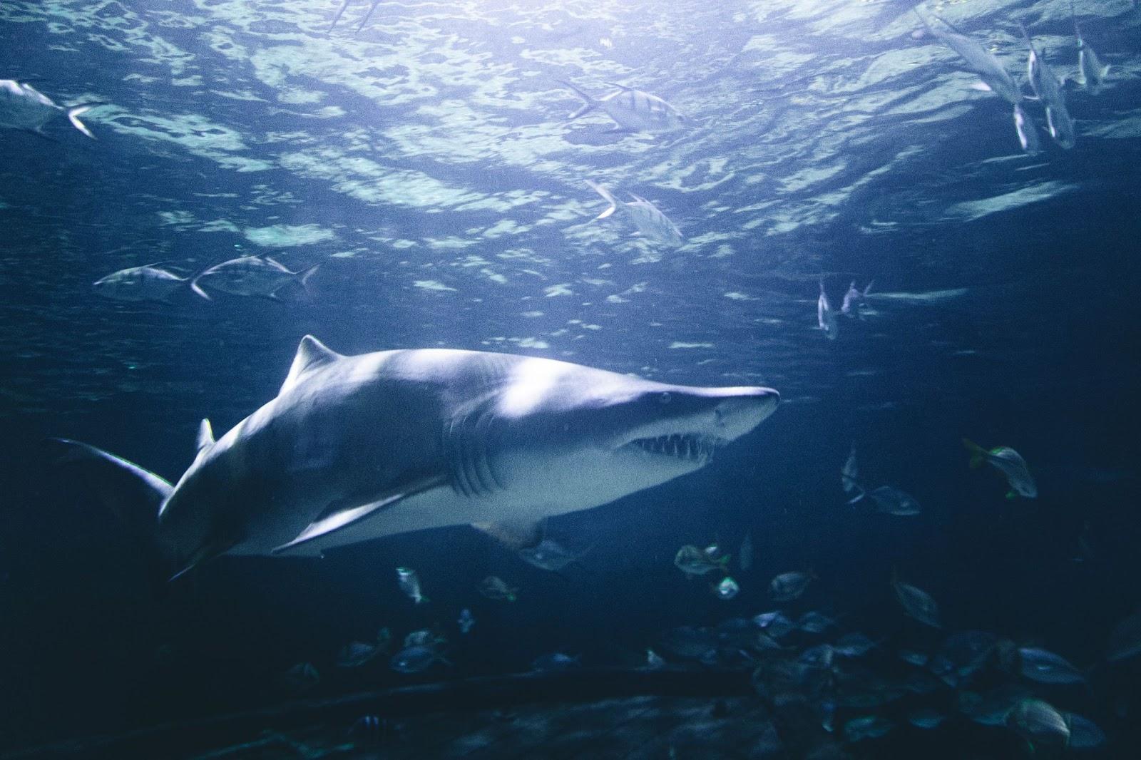 royal chemical shark tank