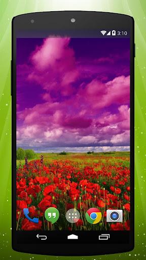 Poppy Field Live Wallpaper