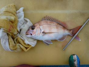 Photo: オカモトさんも真鯛キャッチ!