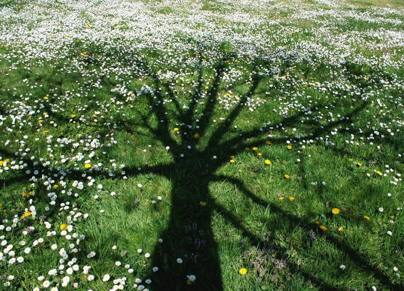 Disteso tra i fiori di Klodas