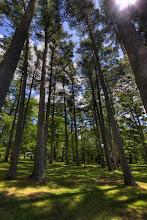 Photo: High Forest - Trois-Rivieres  I've seen many pictures of high tree. This is a first attempt, trying to catch the light coming down.  J'ai vu beaucoup de superbes photos de grands arbres. Ceci est une tentative de capturer la lumière sous ceux-ci.