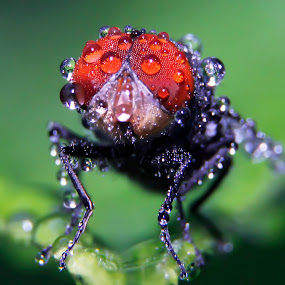 lalat nakal by Miswar Rasyid - Animals Insects & Spiders