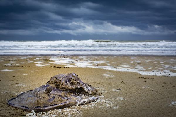 Ultima spiaggia x la medusa   di alessandro_bello