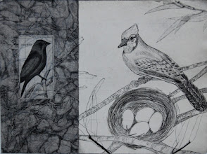 "Photo: Cow Bird v. Blue Jay, 11 x 15"", intaglio"