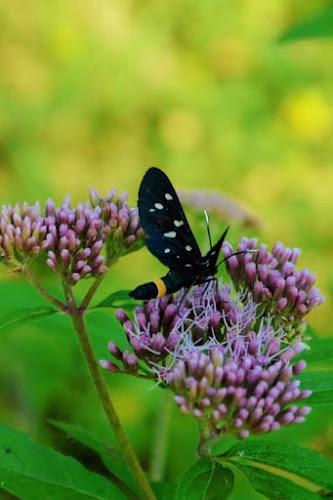 Farfalla nel verde di aprile di efferre_