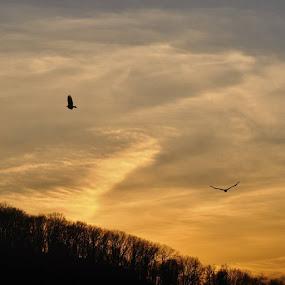 Birds are cool. by Caleb Daniel - Animals Birds (  )