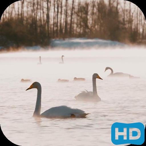 白鳥ビデオLWP 個人化 App LOGO-APP開箱王