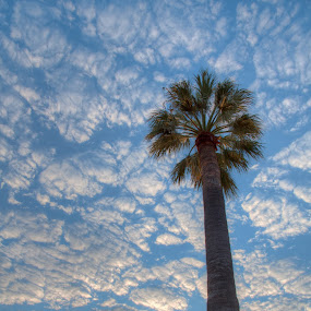 Quilted Sky by Brett Florence - Landscapes Cloud Formations ( palm, sky, tree, quilted, cloud )