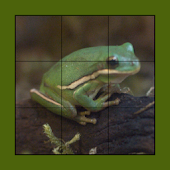 Frog Puzzles Extreme!