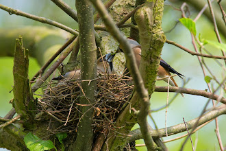 Photo: Op nest