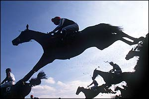 racehorse jumping fence
