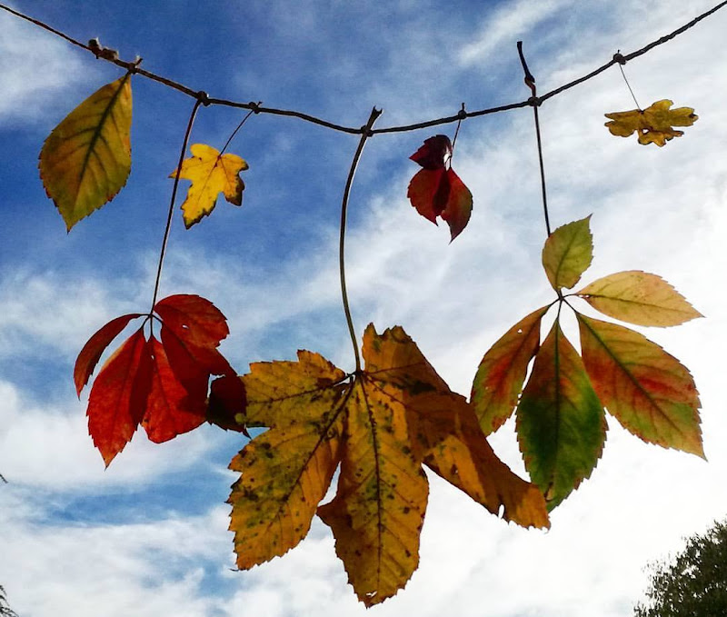 Autumn in town di eljsa88