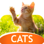 App Wallpapers with cats apk for kindle fire