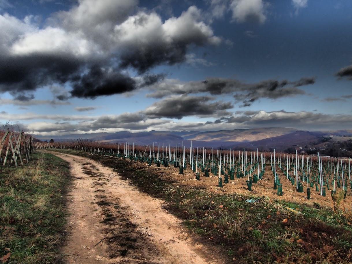 grimpée dans le vignoble de Bergholtz