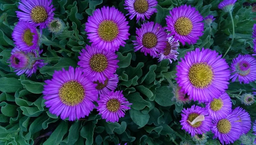 Purples by Gene Richardson - Instagram & Mobile Android