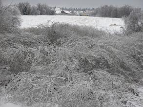 Photo: Бортнево