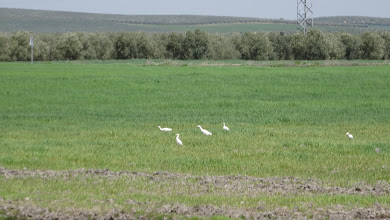 Photo: Egrets chilling out in a field
