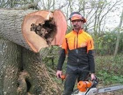Tree surgery cutting in worcestshire