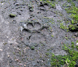 Photo: Wolf paw print outside the school in Pripyat