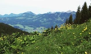 nahe Schönbergalpe Blick über Wiese mit Trollblumen ins Illertal auf Altstädten Obermaiselstein Besler Allgäu