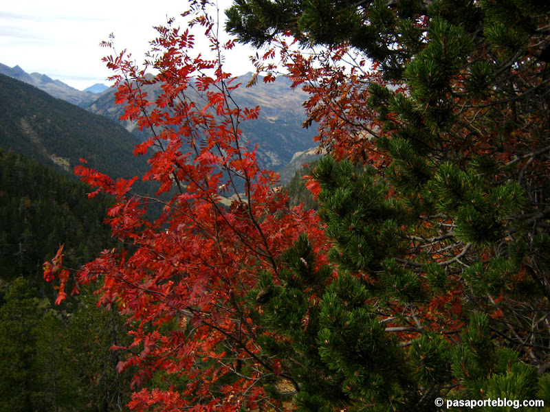 Photo: Otoño en Pirineos