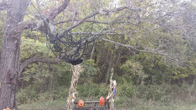 Photo: spider web in the tree - seen on the hay ride