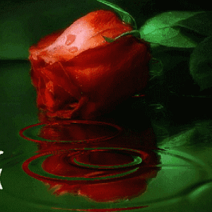 download Green Water Flower LWP apk