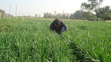 Photo: FAYA Programme Coordinator, RB Khadka, observing  SWI field. 2011 [Photo provided by RB Khadka]