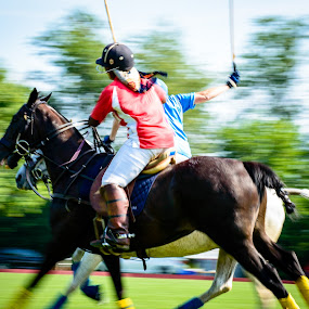 Speedy Polo by Michelle Nolan - Sports & Fitness Other Sports ( polo match, athletics, horses, speed, pa, action, sports, lancaster )