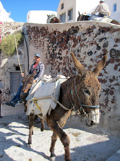 oia-donkeys.jpg - As has been the custom for decades, donkeys make their way up the steep steps of Oia, Santorini.