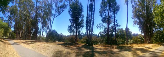 Photo: Eucalyptus panorama