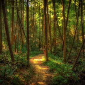 Walk in the woods by Mike Svach - Landscapes Forests ( wods, trail, summer, forest, light, hike )
