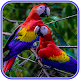 Cute Parrot Wallpaper Download on Windows