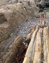 Photo: Exposed faulting at Pt Lobos.