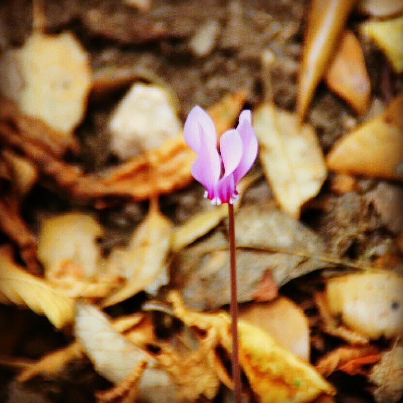 I fiori di primavera sono fiabe, le foglie d'autunno sono drammi tragici. di Giannigiansanti