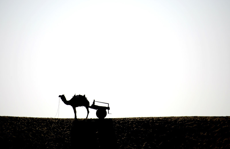 It must be a Camel (F.Zappa) di Migliu
